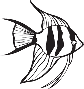 Angelfish black and white drawing - photo#4