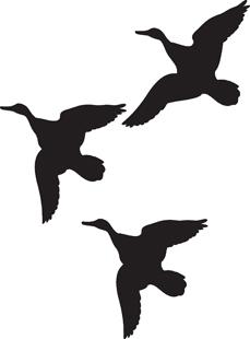 Flock of Geese, Ducks Decals.