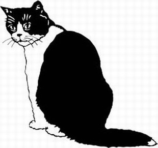 british bicolor shorthair cat