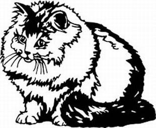 Persian Smoke Cat