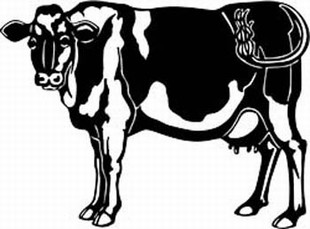 holstein cow decal 7