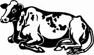 holstein cow decal 5
