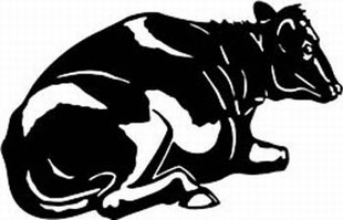 holstein cow decal 1