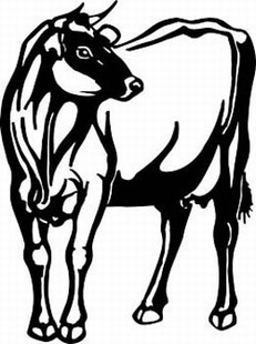 jersey cow decal 1