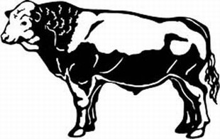 simmenthal cow decal