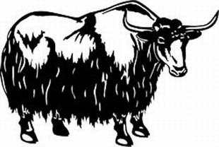 yak decal