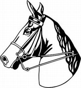 horse head in rein