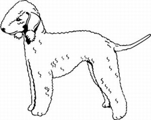 Bedlington Terrier decal