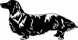Longhaired Dachshund