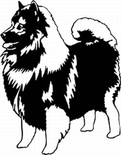 Keeshond Decal