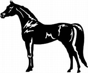 Arabian horse decal