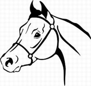 Arabian horse head decal