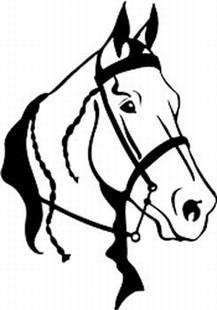 Gaited horse head decal