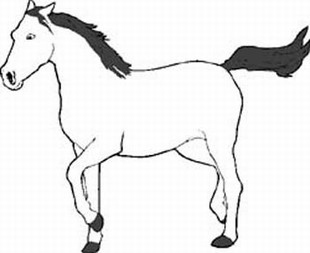 horse decal 10