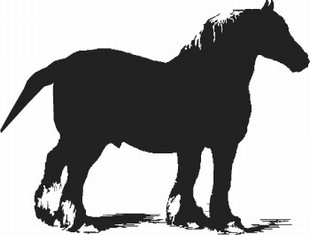 Russian Heavy Draft horse decal