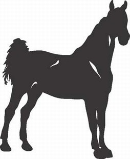 Show horse decal
