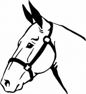 Horse head decal 3
