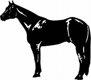 Quarter horse decal 2