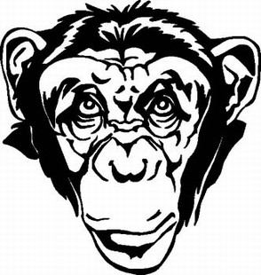 CHIMP HEAD