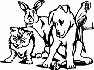 Dog Cat Rabbit and Parrot