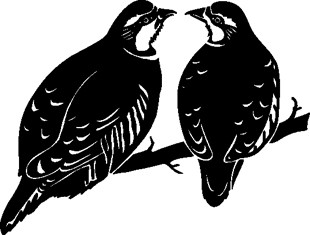 Partridge Birds