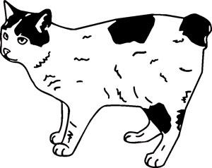 manx tailless cat