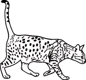 spotted cat 01
